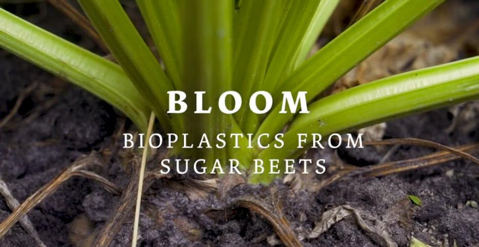 Bioplastik aus Zuckerrüben?